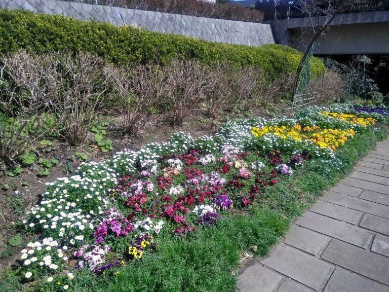 緑道くさぶえのみち入り口でお迎えする春の花壇左側