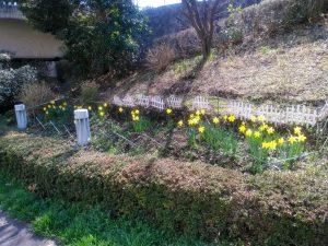 開墾して作った春の花壇右側
