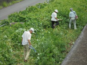 HRG用地は草ぼうぼう。まず、都市大飯島先生が草刈り機で草刈り