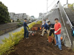 10月26日、 都市大生がヒメツゲの植え込み