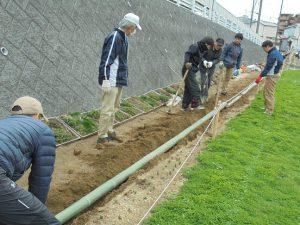 孟宗竹の青竹を半分程埋め込み固定、通路とチューリップの間に長さ150mの見切りを作りました