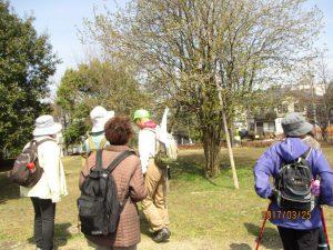 八幡山公園ではカリンの花が咲いていました