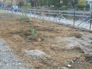 レンゲ畑と果樹