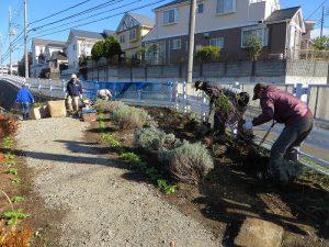 鍜治橋入口付近にセイジを植えました