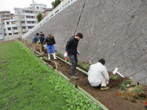 菜の花畑に竹の見切りを設置