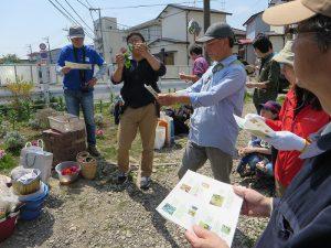 都市大生大川さんの野草の説明