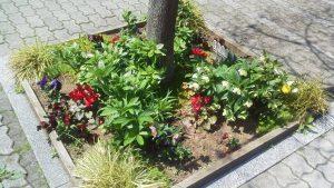 クリスマスローズの咲く街路樹花壇