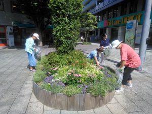 シンボル花壇の雑草取りと花殻摘みをしました
