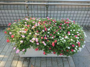 ポーチュラカが咲き誇る歩道橋上プランター