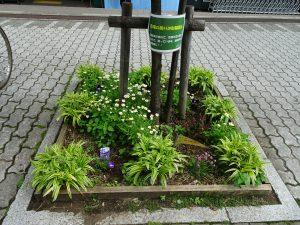 マルエツ前花壇に駐輪禁止の掲示をしました