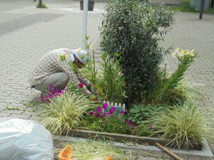 花壇の剪定をしてきれいにします