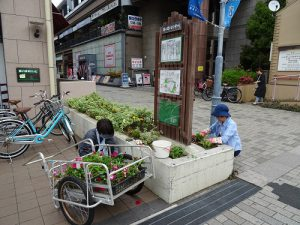 駅前花壇やベンチ花壇の植え替え1