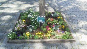 いろいろな花の咲く街路樹花壇