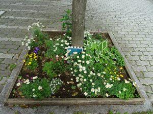 ステージ広場の街路樹花壇
