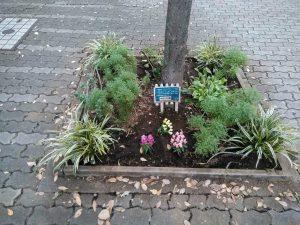 マルエツ側の花壇を冬用に植え替え