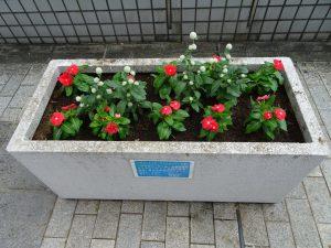 歩道橋上のプランターの花も植え替えました