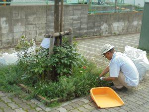 夏は雑草取りが大変です
