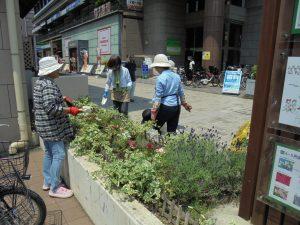 駅前花壇は香りのラベンダー