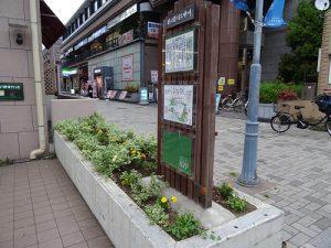 駅前花壇やベンチ花壇の植え替え2