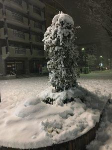 1月22日の大雪で花壇は大打撃