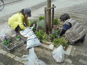 11月14日マルエツ前花壇の植え替え