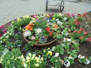ガーデンベアの頭の花