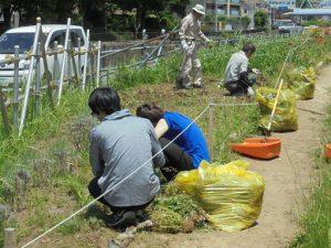 パンジーなどの1年草を抜き、耕しました