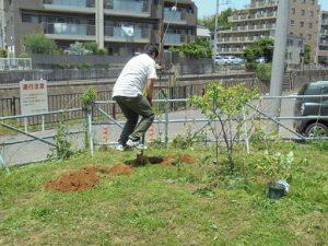 ブルーベリーを植えました