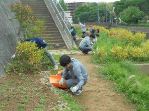 学生の雑草取り2
