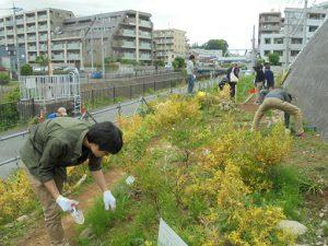 学生の雑草取り