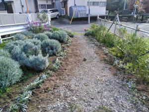 鍛冶橋口にガザニアを移植して園路との見切りを作りました