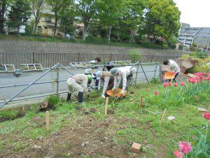 鉄パイプ柵際の草を掘り出し、草侵入防止板を設置しました