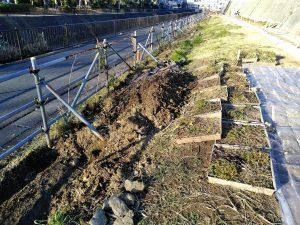 カヤの根掘り出し工事全景