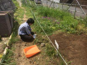 園路の草取り