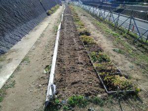 種まきをした後は散水し終了