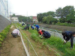 鍛冶橋側園路も草取りできれいになりました
