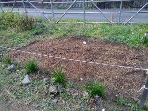 鍛冶橋側花壇にチューリップ球根、サクラソウの種を播きました