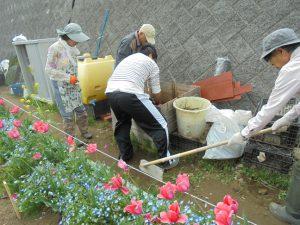 草堆積箱から草を取りだし、緑肥として埋めました