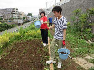 草取り後にコスモスの種を播きました