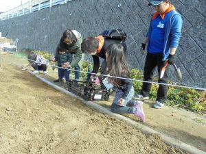 子供もチューリップの球根を植えました