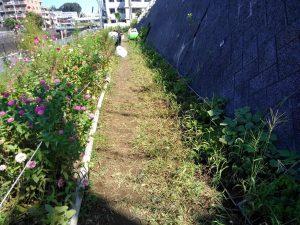 不動尊口園路の草取りをしました