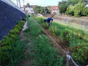 半月前に草取りをした園路も草に覆われてしまった