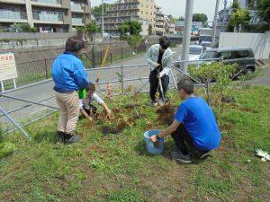 ブルーベリー苗木の植え付け