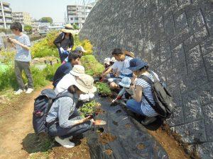 学生の指導でトマトの苗植え