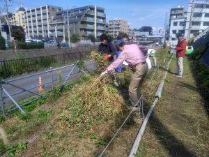 春に向けての植え替えの為にジニア(百日草)を抜き取りました