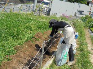 腐葉土、化成肥料、石灰を漉き込みました