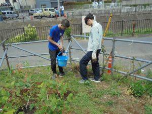 学生がモッコウバラの苗木を植えました