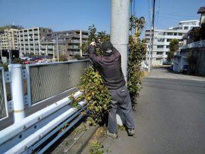 擁壁上道路の木を剪定