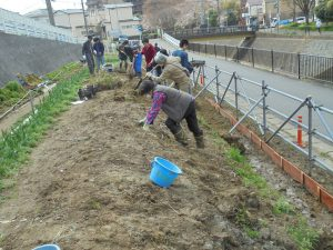 3月24日 掘り出した土からカヤの根や石を選別しながら溝を埋めていきます
