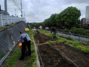 草堆肥をすきこんで苗床作り